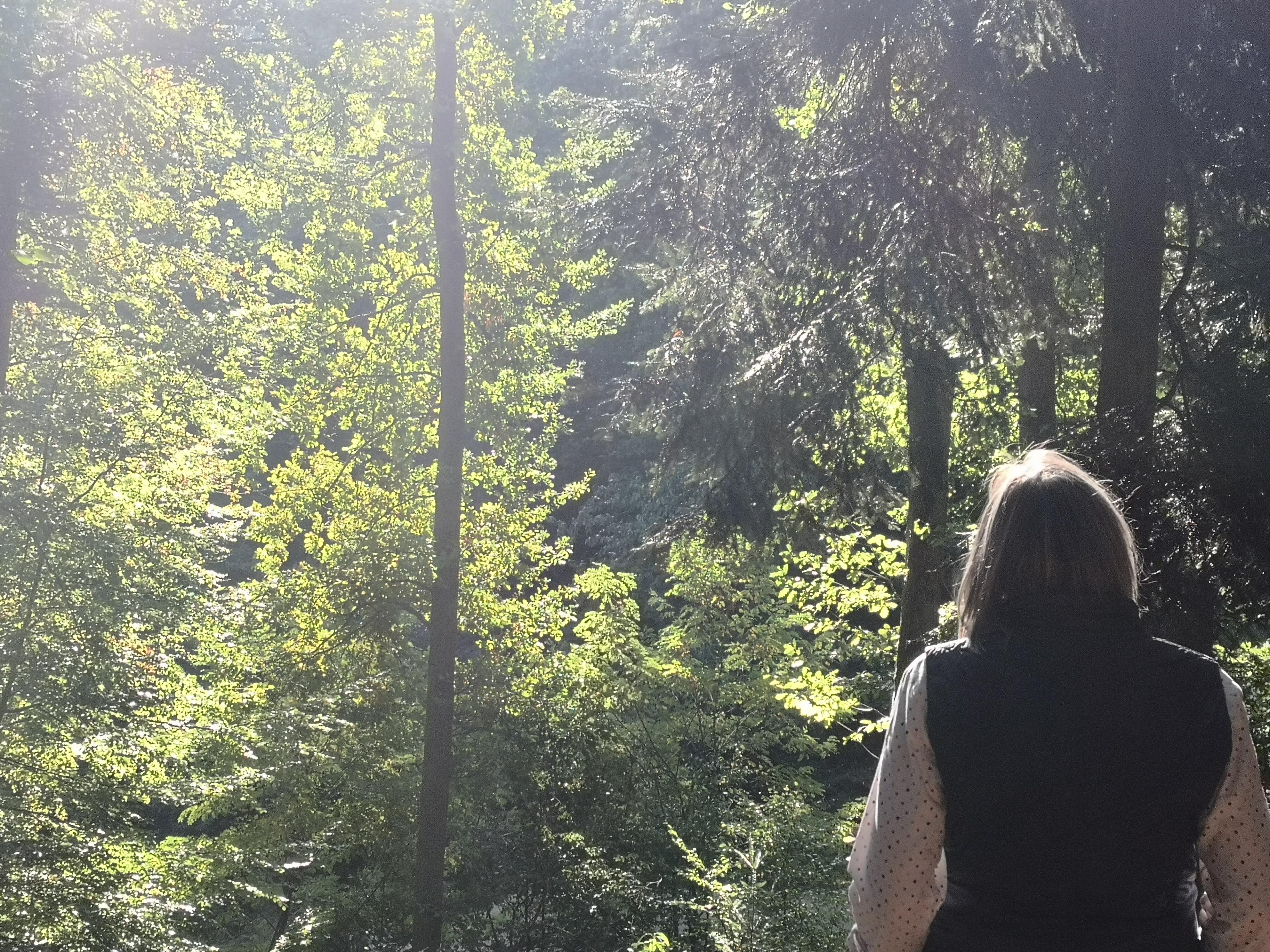 Waldbaden After-Work: Kraft tanken in der Woche durch Achtsamkeit in der Natur - Ratingen