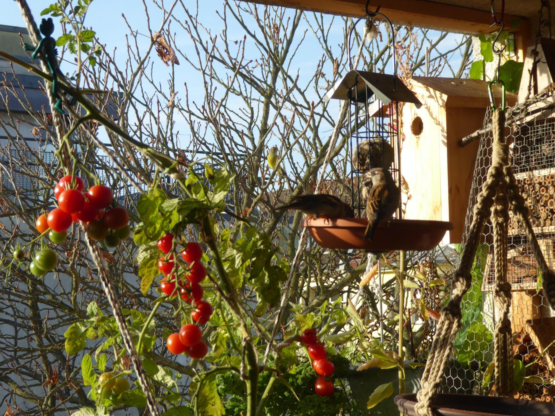 Dein Bio-Balkon Starterguide | Online Kurs